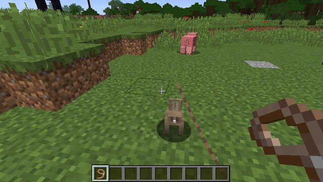 リードを使ってウサギと連れて歩く